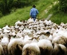 shepherds ead
