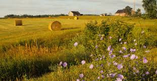 farm field work